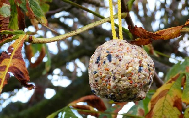 bird-fat-balls