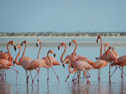 5-15-16-rio-lagartos-pink-flamingos-1